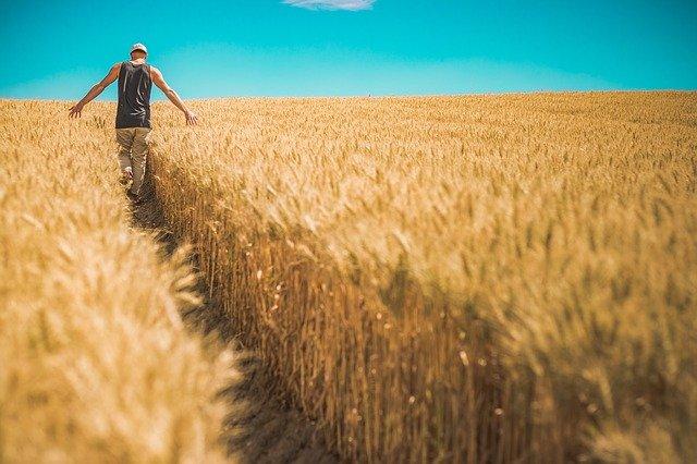 Farming Business